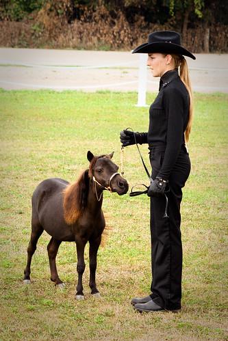 Sydney and the  mini-horses