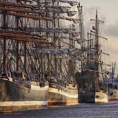 a lot of sail by gerrit de boorder