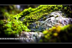Small Life (Koleski) Tags: plants green wet water rock contrast 35mm waterfall flora nikon stream dof bokeh small melbourne sharp d60 mywinners macrolife