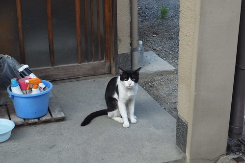 Today's Cat@2010-08-22