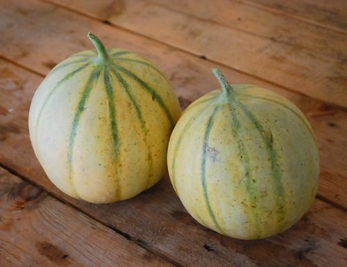 Charantais Melons