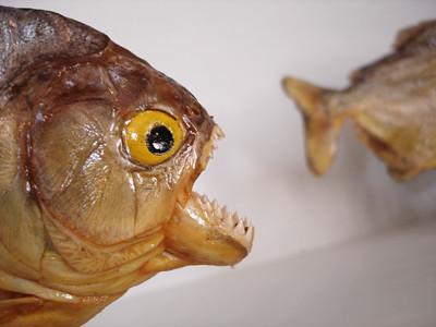 OneFishTwoFish