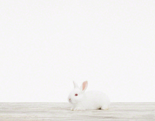 animal printshop_bunny