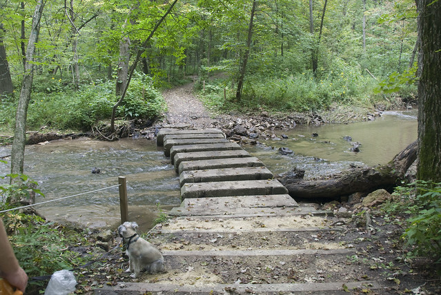 stepping bridge