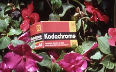 Day 198/365 - The Last Hurrah for Kodachrome (Great Beyond) Tags: flowers red flower color slr film analog 35mm canon project eos colorful image kodak box july slide ishootfilm slidefilm 35mmfilm k2 kodachrome kr 365 eastman slides 3000v woodlandparkzoo 2010 kodachrome64 woodlandpark kodakfilm k14 latent eastmankodak project365 canoneosrebelk2 filmisnotdead canonrebelk2 kr64 iso64 kodakkodachrome64 latentimage july2010 tamronaf28200mm tamron28200mmf3856ldasphericalifsuper