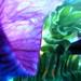 flower world I