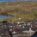Estuary of O Burgo. A Coru