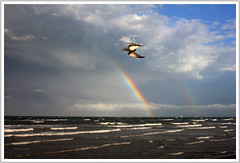 Seagulls and rainbows - Gabbiani e arcobaleni (Robyn Hooz) Tags: sea italy storm canon rainbow italia mare waves flood seagull l arcobaleno bora ef 1740 gabbiano vento onde chioggia temporale 1740l veneto allagamento 550d mywinners