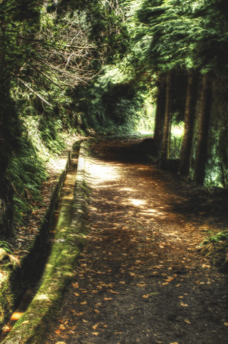 A path through the forest. Un camino por el bosque