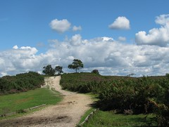 Smugglers, New Forest 2 (carol_malky) Tags: blue trees green grass clouds skies path sandy shrubs newforest smugglers