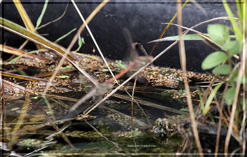 Fuzzy Dragonflies