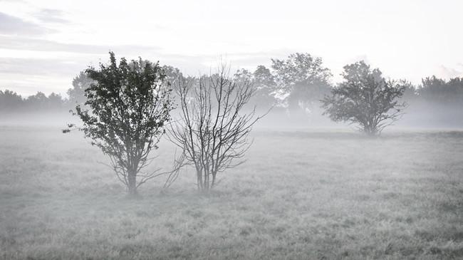 fårhagen i dimma