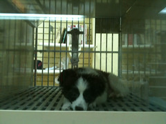 Homeless in NY (lukasch) Tags: dog ny newyork dogs homeless hund petshop gesichtet lukasch lukasadda