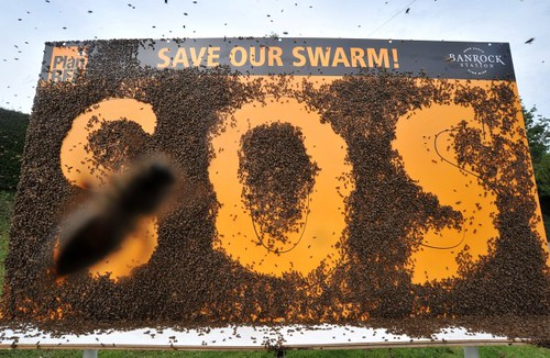 Save_our_swarm_2