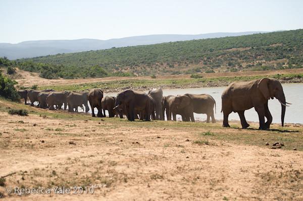RYALE_SA_National_Park_Addo_66