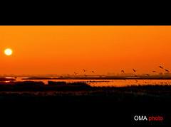 Wake up in a new day in paradise. / Despierta un nuevo da en el paraso. (Oscar Martn Antn) Tags: paradise goose amanecer aurora wakeup paraiso palencia gansos lagunadelanava fuentesdenava mardecampos