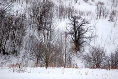 textures and patterns. . . . (Ed Brodzinsky) Tags: trees rural upstatenewyork newyorkstate elkcreek rurallandscape wintercolor schenevus otsegocounty edbrodzinsky winterlines