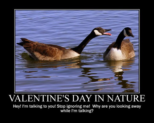 Valentine's Day in Nature