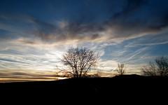 Sunset Tree (SmokinToast) Tags: blue sunset wallpaper sky blackandwhite bw plants usa moon white mountain black newmexico santafe art strange plane sunrise scenery rocks fuji desert jet odd wierd kayla clounds lanscape f111 hs10
