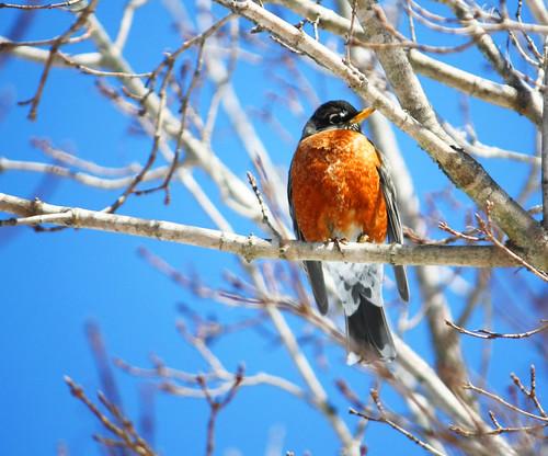 snowbirds4