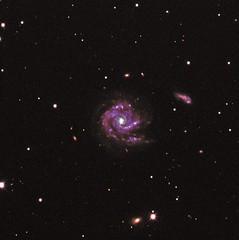 GALAXY NGC1073 (Shazia Webster) Tags: red green blue purple pink astro astronomy astrophotography aesthetic astronomer exposure inspiration interesting contrast monotone monochrome colour solitude perfection peace galaxies galaxy grey beauty blackandwhite black bw bright bestphotography nebula nature night nightphotography nightsky ngc spiral dark detail darkness repetition shadow sky stars space spiralgalaxy outerspace gcseastronomy telescope