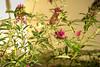 DMT_20170531175405 (Felicia Foto) Tags: allrightsreserved denisetschida butterflybush buddleja buddleia thompsonsstation tennessee middletennessee williamsoncountytennessee backyard outdoors 3xp hdr highdynamicrange photomatix photoshop sunset nikon nikond600 d600 evening outdoor sunny geotagged magenta pink botanical flora flowers floweringplant bush shrub