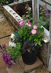 Trials Garden, Ashbourne (Blue Sky Pix) Tags: plants pot garden kirk langley ashbourne derbyshire trialsgarden manicured perfect inspirational england pentax