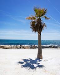 clean beach @ Benalmadena, Málaga, Spain (MANFRED SODIA photography) Tags: cleanbeach see whitesand palmtree palm málaga spain benalmadena