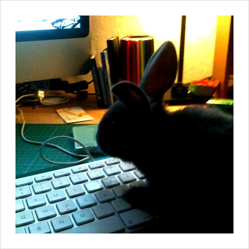when bunnies blog