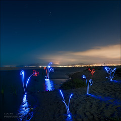 Plants of light (Lucas Janin | www.lucas3d.com) Tags: california city longexposure blue light red sky usa cloud lightpainting color reflection beach water night star iso200 sand nikon lumire sable led explore ciel moonlight 24mm f80 nikkor nuage nuit plage ventura ville lightroom longueexposition 1200sec lightroom3 nikond700 lucasjanin afsnikkor2470mmf28ged