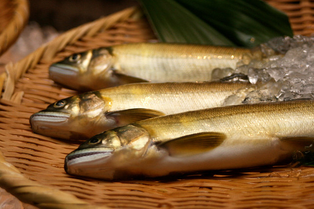 Ayu or sweetfish is in season
