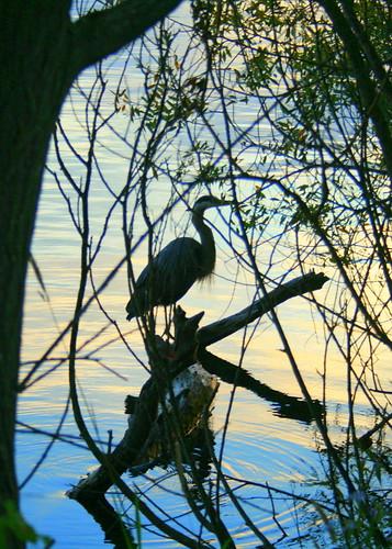 109: Heron