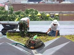 installation of green roof, U. of Michigan (by: Corey Seeman, creative commons license)