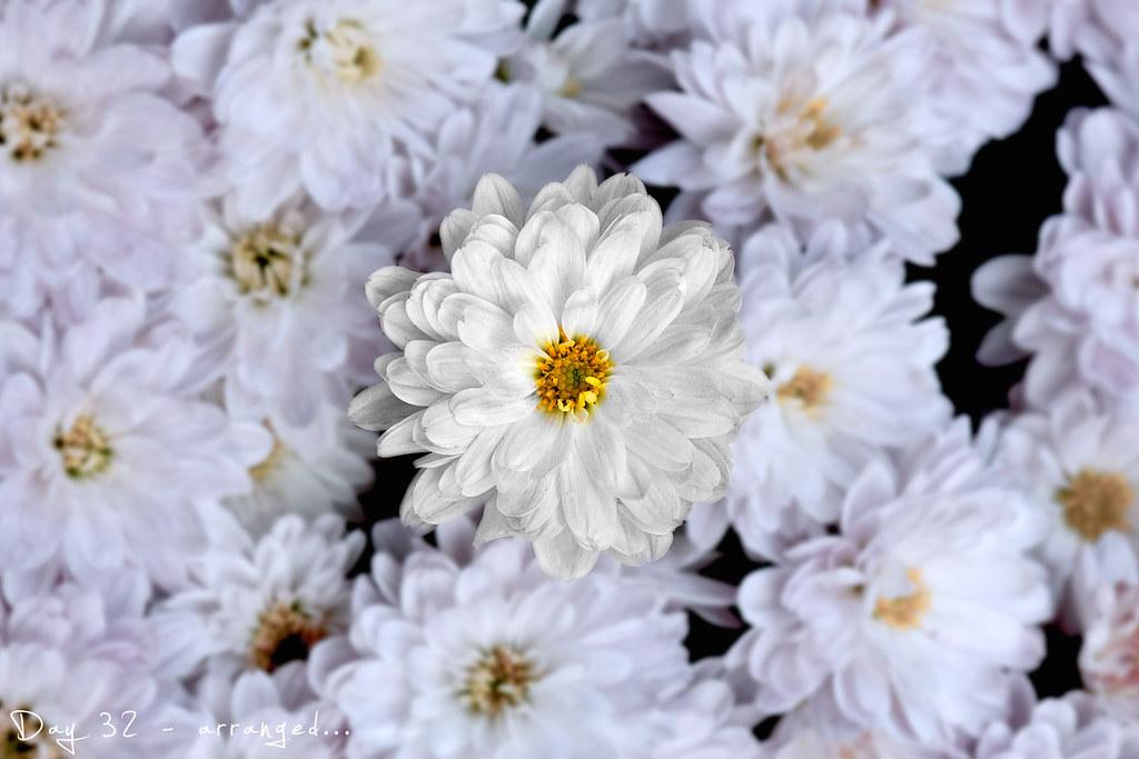 project 365, day 32, 032/365, flower, arrange flower, arrange flowers
