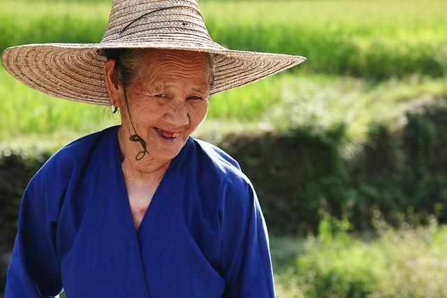 Woman harvesting rice, Chengyang, Guangxi, China
