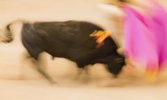 0718-Acuarela taurina (I) (Eduardo Arias Rábanos) Tags: sex fauna composition watercolor nude nikon blurred bull sexo galicia galiza bullfighter desenfoque acuarela corrida toro desnudo torero tauromaquia composición borroso velocidadlenta eduardoarias mygearandme eduardoariasrábanos
