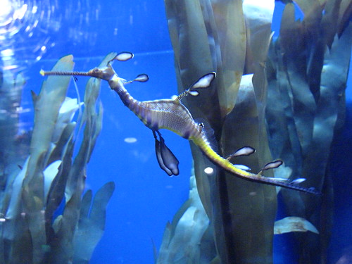 Georgia Aquarium 31