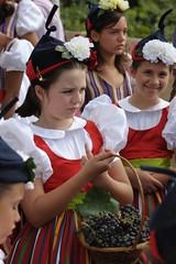 Festa das Vindimas / Wine Festival - 2010 (Madeira Island) Tags: festival wine harvest festa madeira grape vinho vindimas estreitodecâmaradelobos