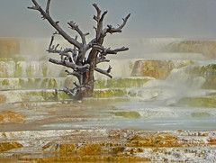 In Flux (dbushue) Tags: hot terrace surreal steam yellowstonenationalpark change algae stark travertine bacteria thermal 2009 soe microorganisms mammothhotsprings naturesfinest blueribbonwinner coth supershot naturesgarden itsawonderfulworld mywinners theunforgettablepictures upperterracedrive steplike absolutelystunningscapes damniwishidtakenthat dragondaggerphoto flickrclassique coth5 mygearandmepremium dailynaturetnc10 photocontesttnc11 winterholidaystnc10