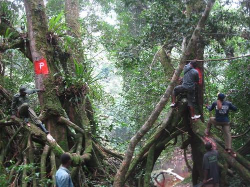 park delimitations near Oluwo