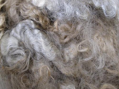 Gotland fleece