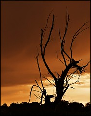 a dragon (JoannaRB2009) Tags: sunset summer sky tree nature clouds dragon branches poland polska dry ent lodz łódź malyn lodzkie łódzkie małyń