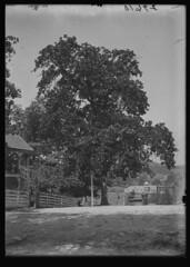 Anglų lietuvių žodynas. Žodis blackjack oak reiškia blackjack ąžuolas lietuviškai.
