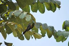 (stttijn) Tags: lake bird see meer lac uganda oiseau vogel bunyonyi ouganda oeganda