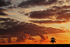 """Sunset in France (Susan SRS) Tags: sunset sky france clouds rural countryside driving lonetree ruralfrance platinumphoto august2010 cloudslightningstorms """"flickraward"""" image6163"""