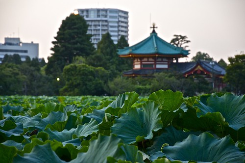 Estanque de Ueno