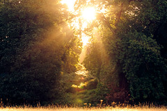 you fill me with inspiration (andrew evans.) Tags: lighting morning trees light summer england sun mist nature misty fog fairytale forest sunrise landscape golden countryside kent woods nikon ethereal flare lonely rays emotional sunrays wonderland storybook magical 70200 f28 enchanted d3