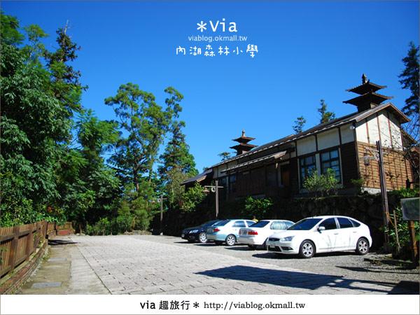 【溪頭一日遊】森林中的夢幻校園~內湖森林小學3