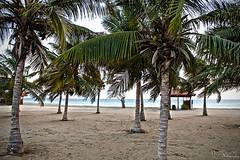 The PetroRabigh Beach (AKstudios) Tags: road trip trees beach water leaves car weather canon eos rebel cool sand awesome ak saudi arabia breeze 2010 ksa 550d t2i raigh petrorabigh akstudios akstudios