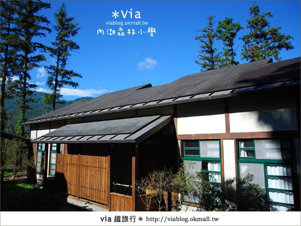 【溪頭一日遊】森林中的夢幻校園~內湖森林小學29